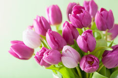 Beautiful purple tulip flowers background Royalty Free Stock Images