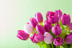 Beautiful purple tulip flowers background Royalty Free Stock Photo