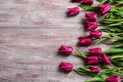 Beautiful purple tulips stock images