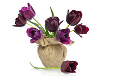 Beautiful purple tulips. In a vase Stock Image