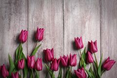 Beautiful purple tulips. On wooden background Stock Image
