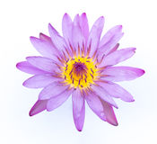 A beautiful Purple waterlily or lotus flower Stock Photo