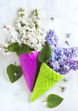Beautiful purple and white lilac flowers Stock Image