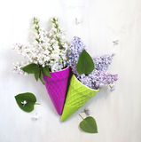 Beautiful purple and white lilac flowers Stock Images