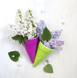 Beautiful purple and white lilac flowers Stock Photos