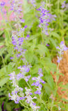 Beautiful purple wild flower Royalty Free Stock Photo