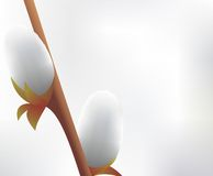 Beautiful pussy willow flowers branches. Stock Image