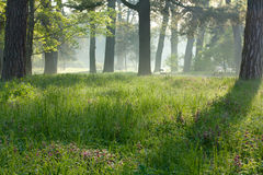 Beautiful, quiet morning in the park of the city. Peaceful foggy morning Royalty Free Stock Photography