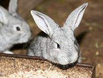 Beautiful rabbit on the farm. In the park in nature Stock Photography