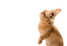 Beautiful Rabbit Isolated Stock Photography