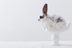 Beautiful rabbit in vase Stock Photos