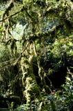 Beautiful rain forest royalty free stock image