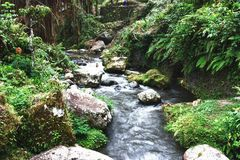 Free Beautiful Rain Forest Royalty Free Stock Images - 21199829