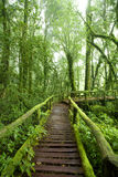 Beautiful rain forest Stock Photo