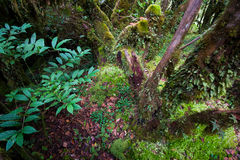 Beautiful rain forest at ang ka nature trail in doi inthanon nation park, Thailand Stock Photo