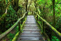 Beautiful rain forest at ang ka nature trail Stock Image