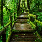 Beautiful rain forest at ang ka nature trail Royalty Free Stock Photography