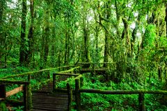 Beautiful rain forest at ang ka nature trail Stock Photos