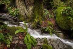 Beautiful Rain Forest Creek in the Pacific Northwest. Stock Photos