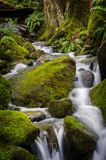 Beautiful Rain Forest Creek in the Pacific Northwest. Stock Images