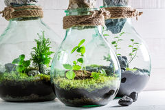 Beautiful rain forest in a jar as new life concept Stock Photo