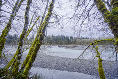 Beautiful rain forest trees at Hoh River - FORKS - WASHINGTON Stock Image
