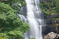 Beautiful rain forest and waterfall Stock Image