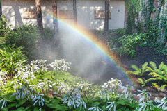 Beautiful rainbow in blooming park. Right half of the rainbow arc over the white colors of the host in a well-kept park on a summer day Stock Image