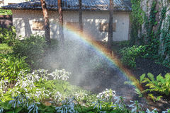 Beautiful rainbow in blooming park. Right half of the rainbow arc over the white colors of the host in a well-kept park on a summer day Royalty Free Stock Photography