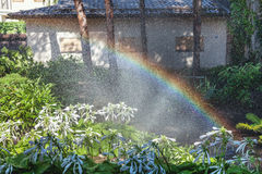 Beautiful rainbow in blooming park. Right half of the rainbow arc over the white colors of the host in a well-kept park on a summer day Stock Photography