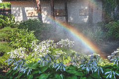 Beautiful rainbow in blooming park. Right half of the rainbow arc over the white colors of the host in a well-kept park on a summer day Royalty Free Stock Image