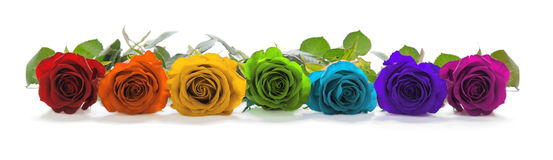 Beautiful Rainbow Colored Row of Roses. A single line of rose heads facing forwards in red, orange, yellow, green, turquoise, indigo and magenta representing the Royalty Free Stock Photography