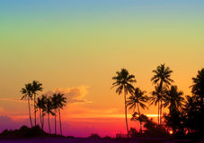 Beautiful Rainbow Colors Sunset With Black Palms Royalty Free Stock Images
