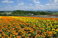 Beautiful rainbow flower field on the hill Stock Photography