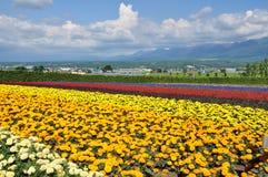 Beautiful rainbow flower field on the hill Stock Photos