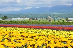 Beautiful rainbow flower field on the hill Royalty Free Stock Photos