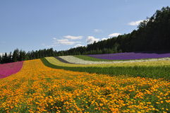 Beautiful rainbow flower field on the hill Royalty Free Stock Images