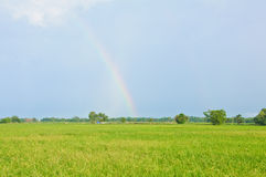 Beautiful rainbow on the rice field Royalty Free Stock Photography