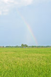 Beautiful rainbow on the rice field Royalty Free Stock Photography