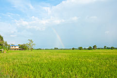 Beautiful rainbow on the rice field Royalty Free Stock Images