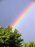Beautiful rainbow and tree background Stock Photos