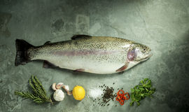 Beautiful Rainbow Trout with Fresh Herbs and Spices Royalty Free Stock Images