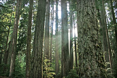 Beautiful rainforest in British Columbia, Canada. Beautiful rainforest as seen in Pacific Rim National Park, Vancouver Island, BC, Canada stock images