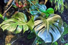 Beautiful rainforest Royalty Free Stock Image