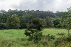 Beautiful rainforest vista at the Kuilau Ridge area, Lihue-Koloa Forest Reserve on Kauai, Hawaii, after a rainstorm stock photo