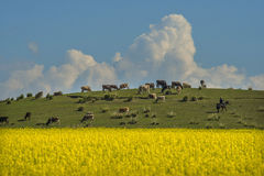 Beautiful ranch Tianshan Stock Images