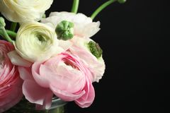 Beautiful ranunculus flowers on black background. Closeup Stock Image