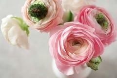 Beautiful ranunculus flowers on light background. Closeup Royalty Free Stock Photography