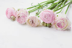 Beautiful ranunculus flowers on white stone table. Floral border in pastel color. Greeting card for Mothers or Womans Day. royalty free stock photo