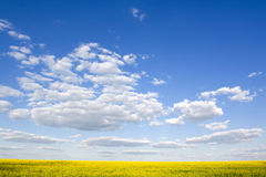 Beautiful rape field and clear blue sky Royalty Free Stock Image